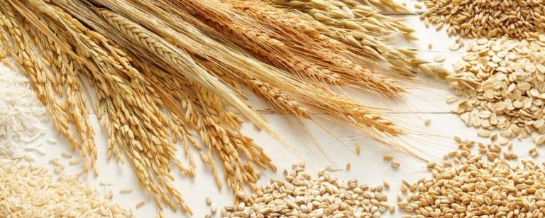 Langzamen koolhydraten in graan
