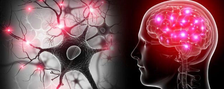 Menselijk brein
