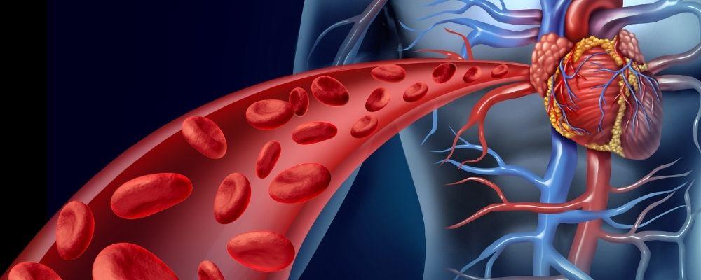 Bloed wordt naar het hart gepompt door stress